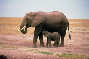 K Strategist Examples The discovery of 6 slaughtered elephants last month in two of Thailand ...